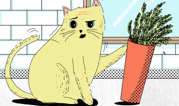 Cats, Carrots, and Teaching through Shame